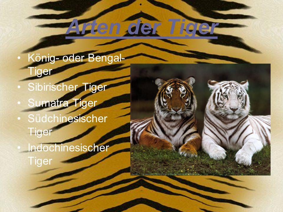 Arten der Tiger König- oder Bengal-Tiger Sibirischer Tiger