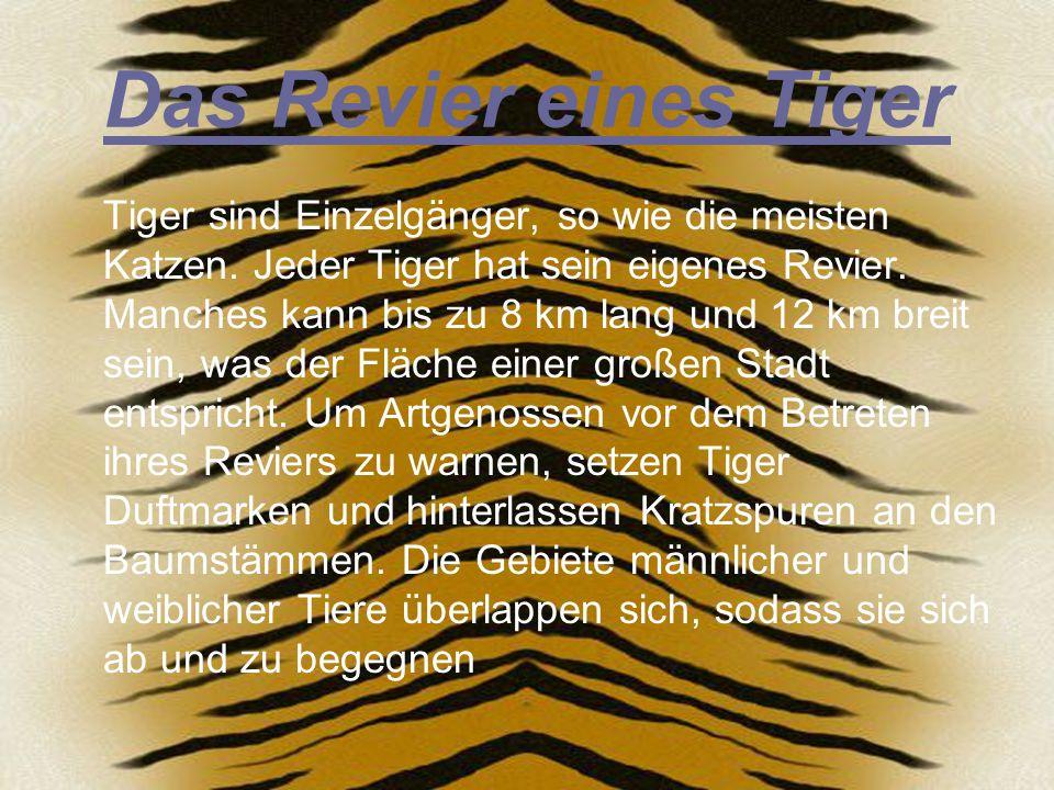 Das Revier eines Tiger