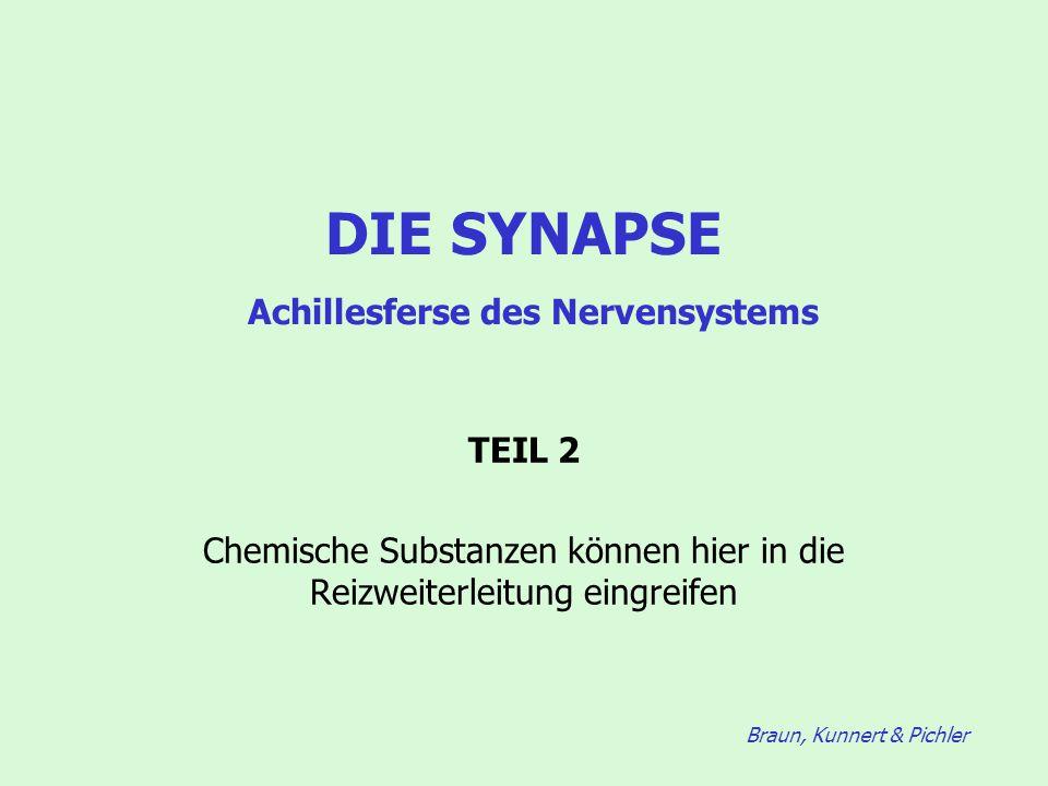 DIE SYNAPSE Achillesferse des Nervensystems