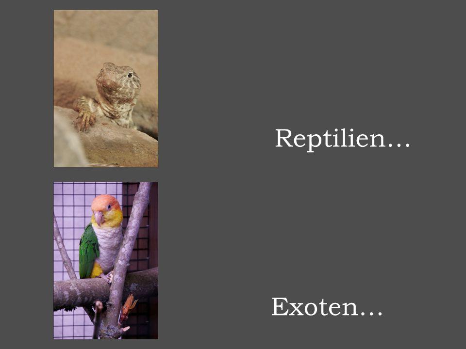 Reptilien… Exoten…