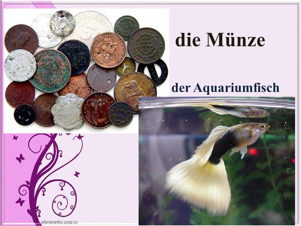 die Münze der Aquariumfisch