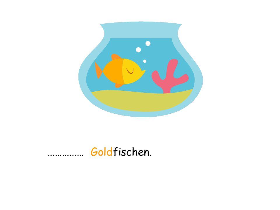 …………… Goldfischen.