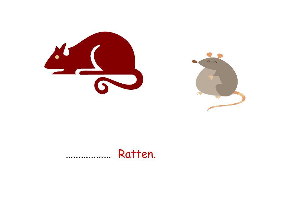 ……………… Ratten.