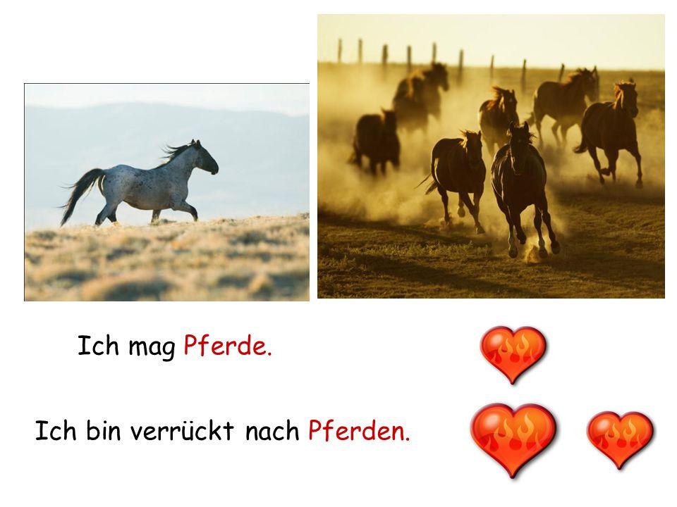 Ich mag Pferde. Ich bin verrückt nach Pferden.