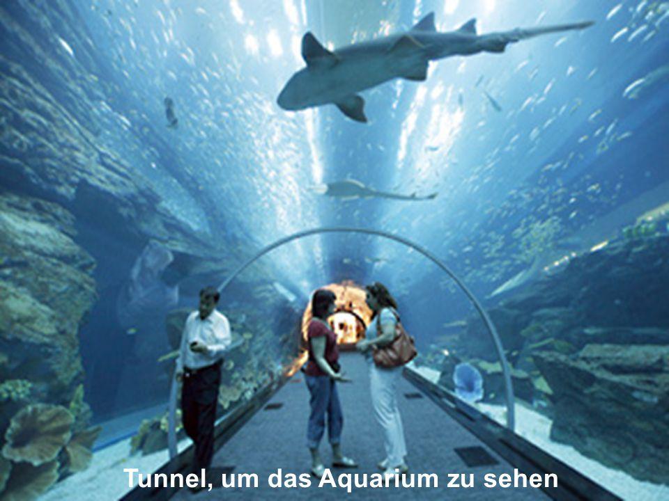 Tunnel, um das Aquarium zu sehen
