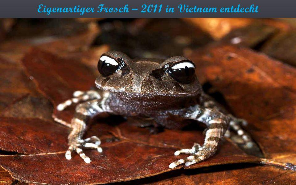 Eigenartiger Frosch – 2011 in Vietnam entdeckt
