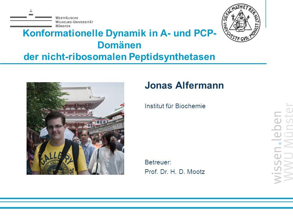 Konformationelle Dynamik in A- und PCP-Domänen der nicht-ribosomalen Peptidsynthetasen