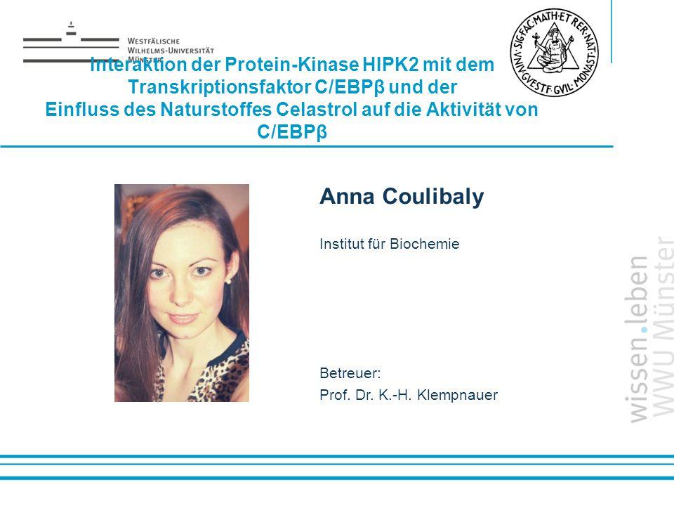 Interaktion der Protein-Kinase HIPK2 mit dem Transkriptionsfaktor C/EBPβ und der Einfluss des Naturstoffes Celastrol auf die Aktivität von C/EBPβ