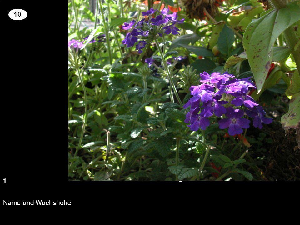 Setzen Sie an der richtigen Stelle die Kreuze um für die genannten Pflanzen richtige Blütenfarbe und Wuchshöhe zu zuordnen.