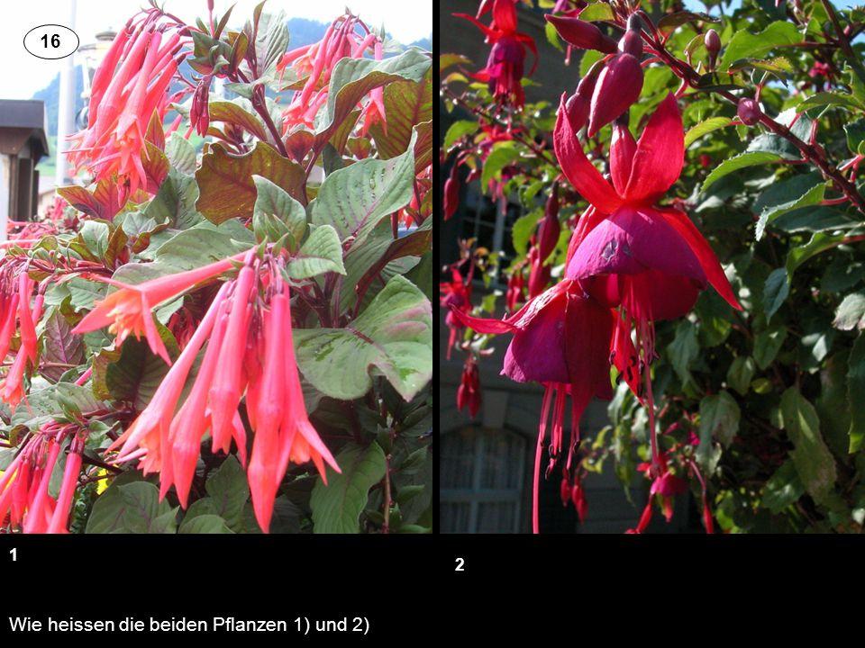 Wie heissen die beiden Pflanzen 1) und 2)