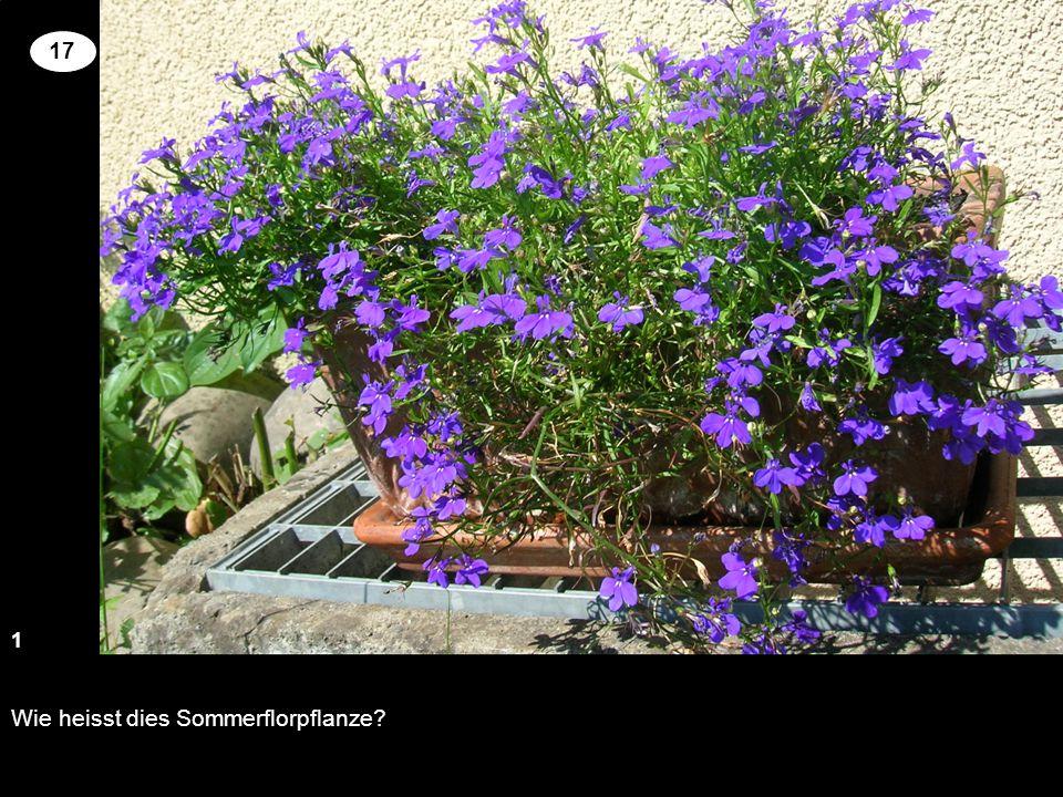 Wie heisst dies Sommerflorpflanze