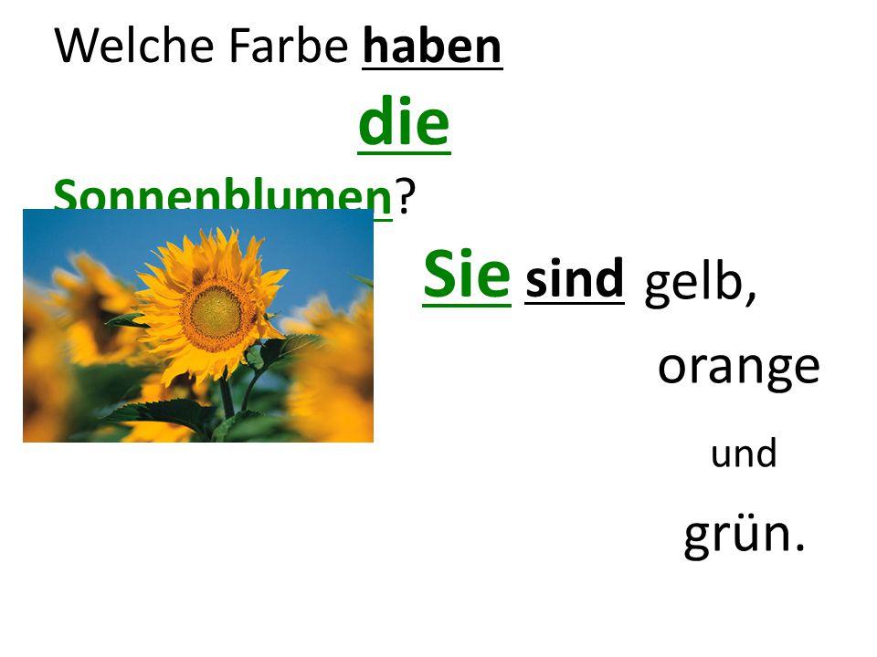 Welche Farbe haben die Sonnenblumen