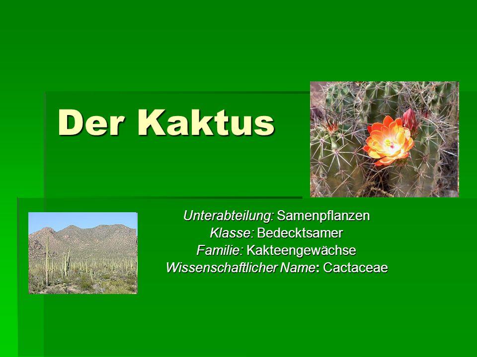 Der Kaktus Unterabteilung: Samenpflanzen Klasse: Bedecktsamer