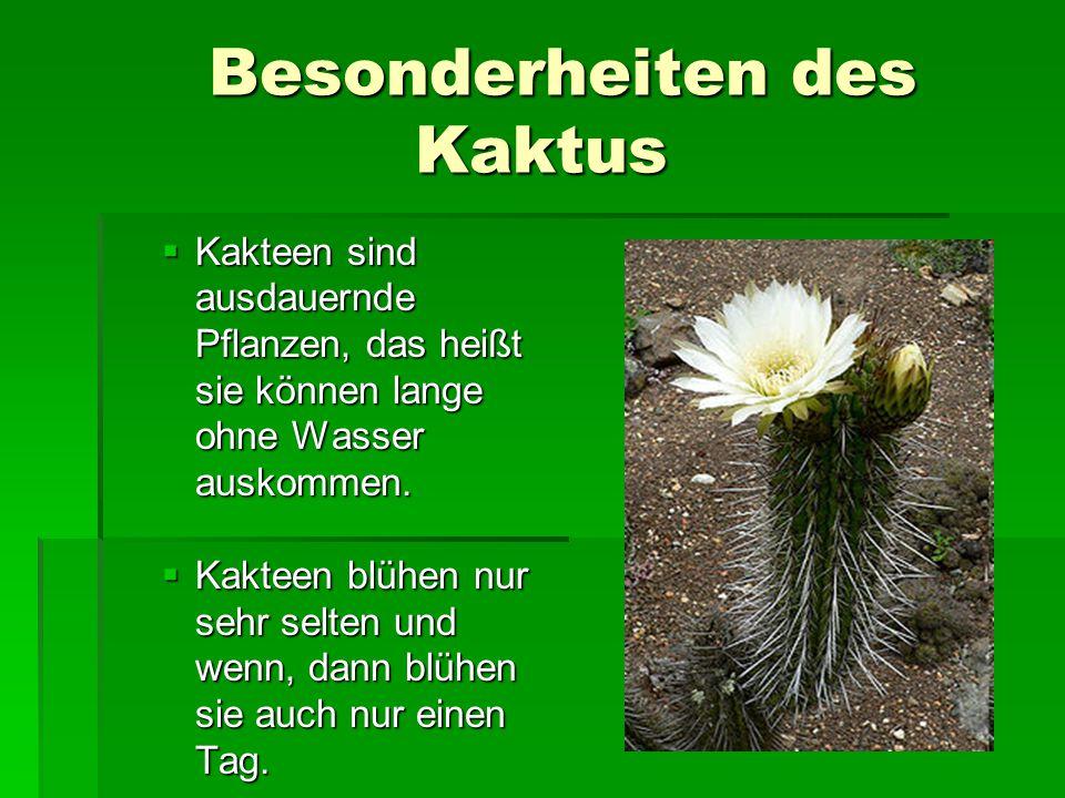 Besonderheiten des Kaktus