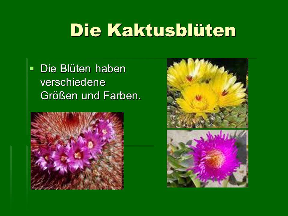 Die Kaktusblüten Die Blüten haben verschiedene Größen und Farben.
