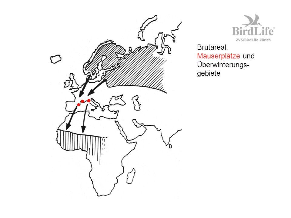 Brutareal, Mauserplätze und Überwinterungs-gebiete