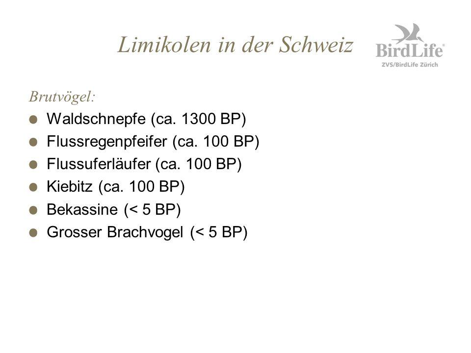 Limikolen in der Schweiz