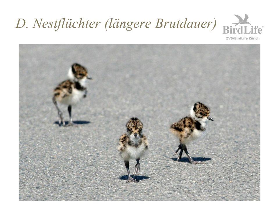 D. Nestflüchter (längere Brutdauer)