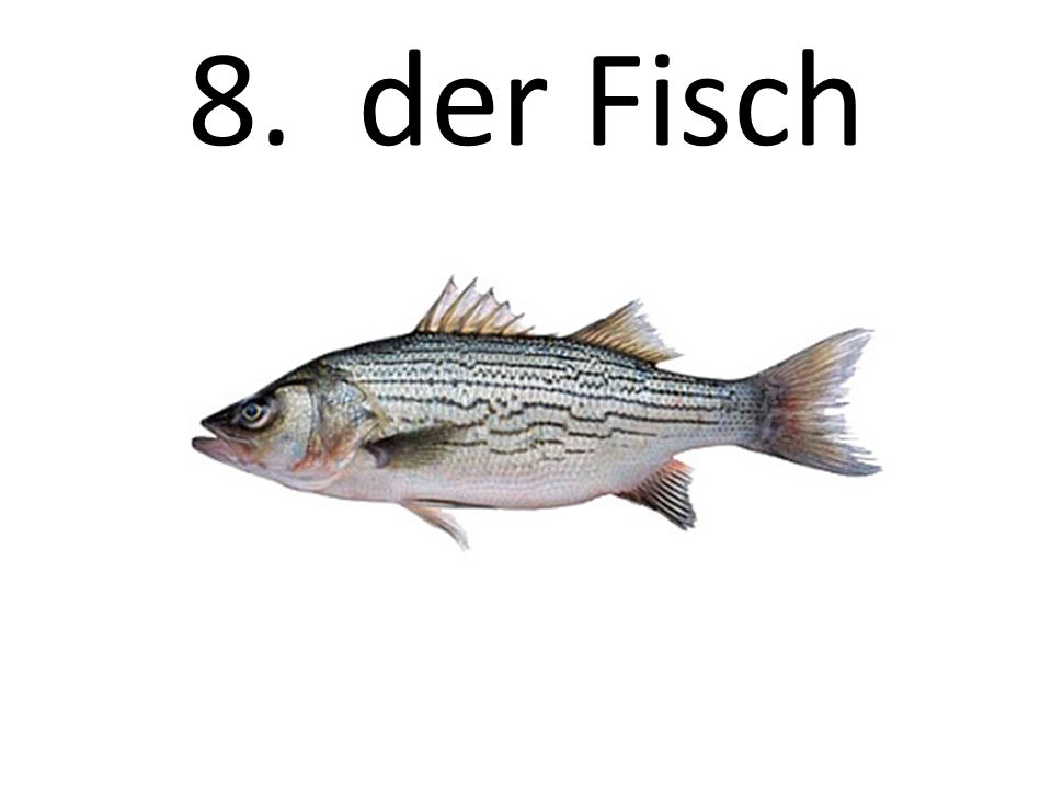 8. der Fisch The fish