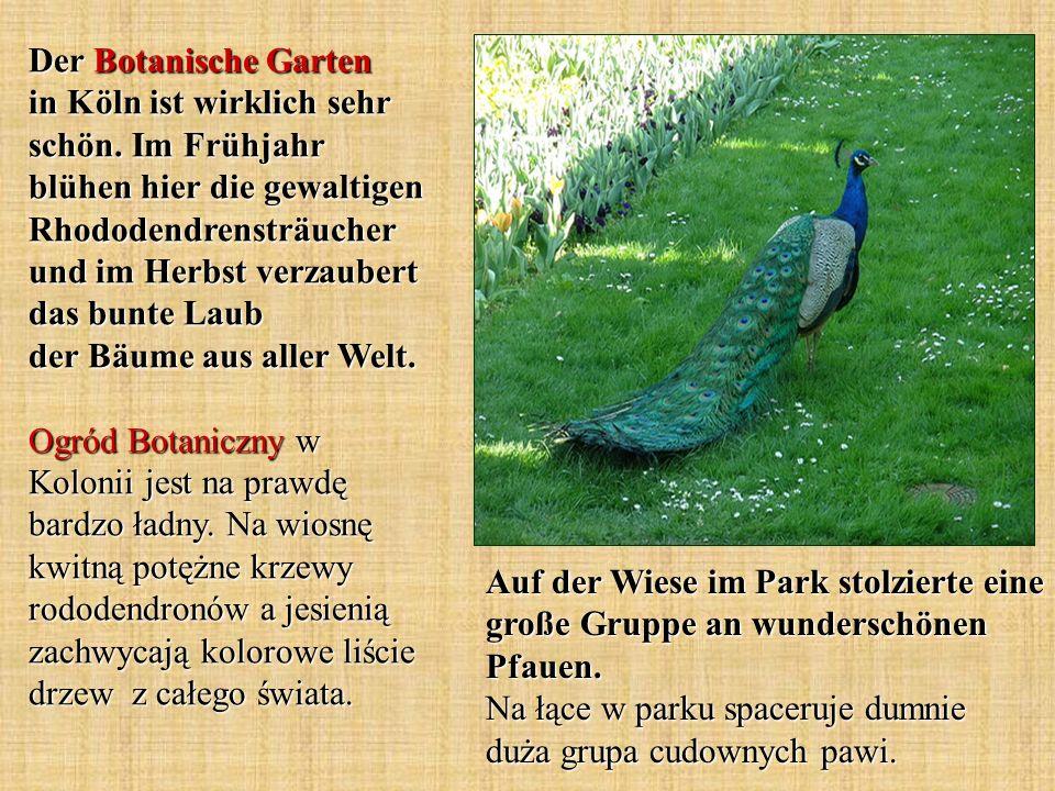 Der Botanische Garten in Köln ist wirklich sehr schön