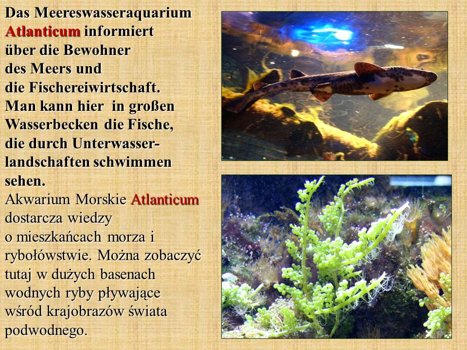 Das Meereswasseraquarium Atlanticum informiert über die Bewohner des Meers und die Fischereiwirtschaft.