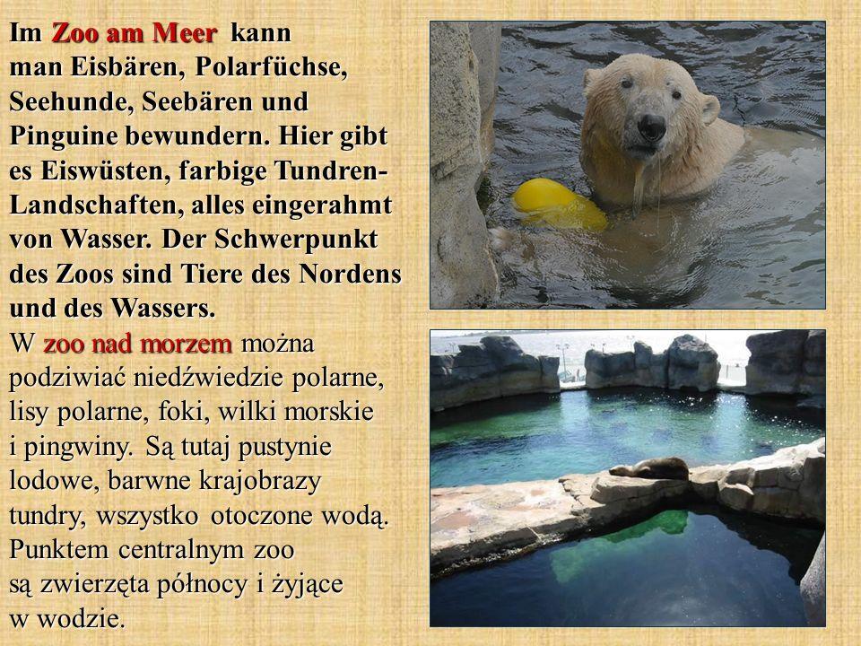 Im Zoo am Meer kann man Eisbären, Polarfüchse, Seehunde, Seebären und Pinguine bewundern.