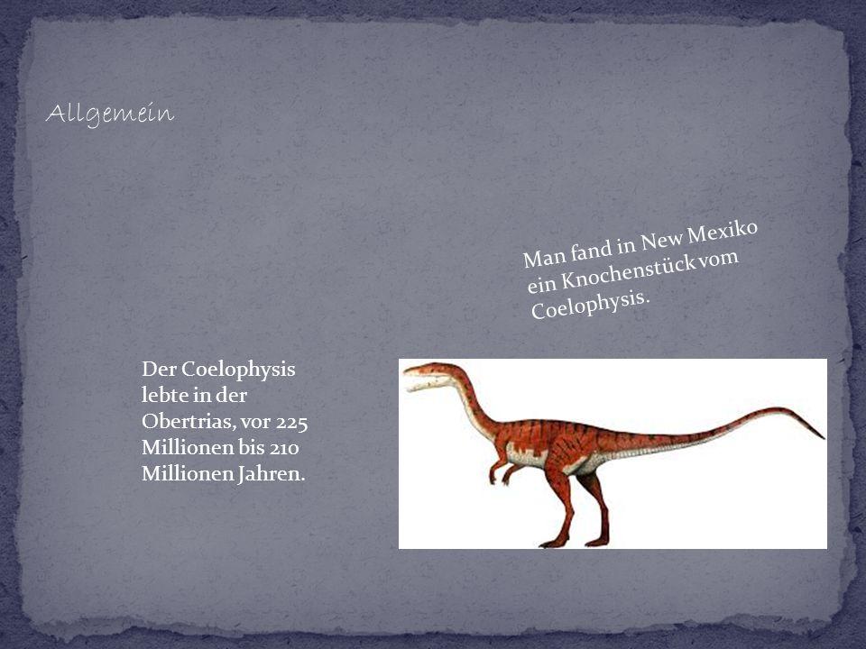 Allgemein Man fand in New Mexiko ein Knochenstück vom Coelophysis.