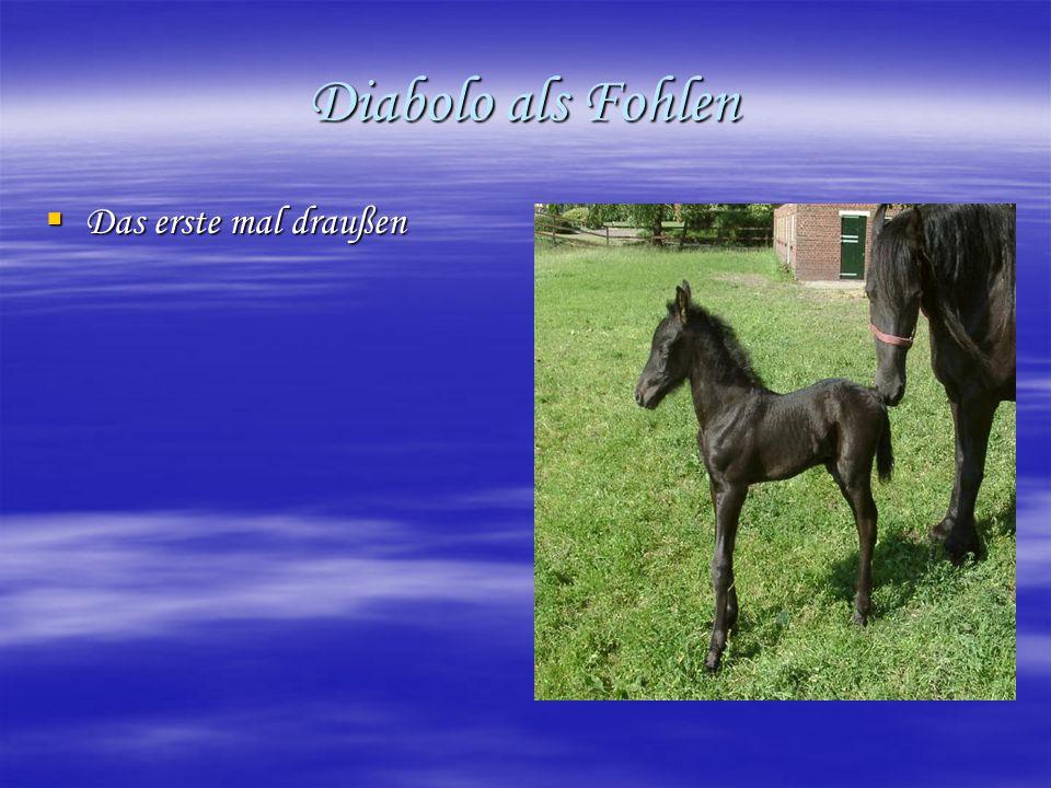 Diabolo als Fohlen Das erste mal draußen