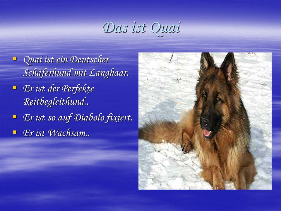 Das ist Quai Quai ist ein Deutscher Schäferhund mit Langhaar.
