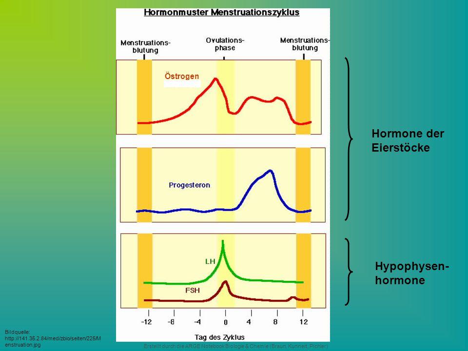 Hormone der Eierstöcke