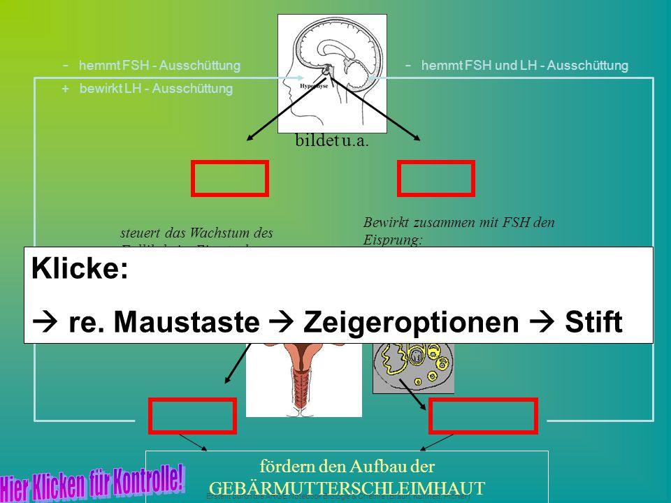  re. Maustaste  Zeigeroptionen  Stift