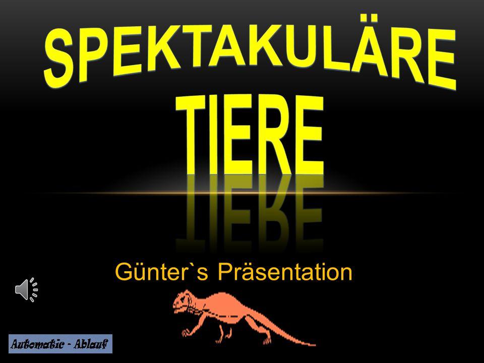 Günter`s Präsentation