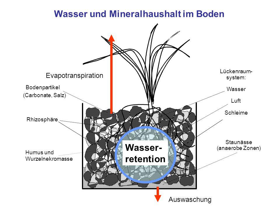Wasser und Mineralhaushalt im Boden