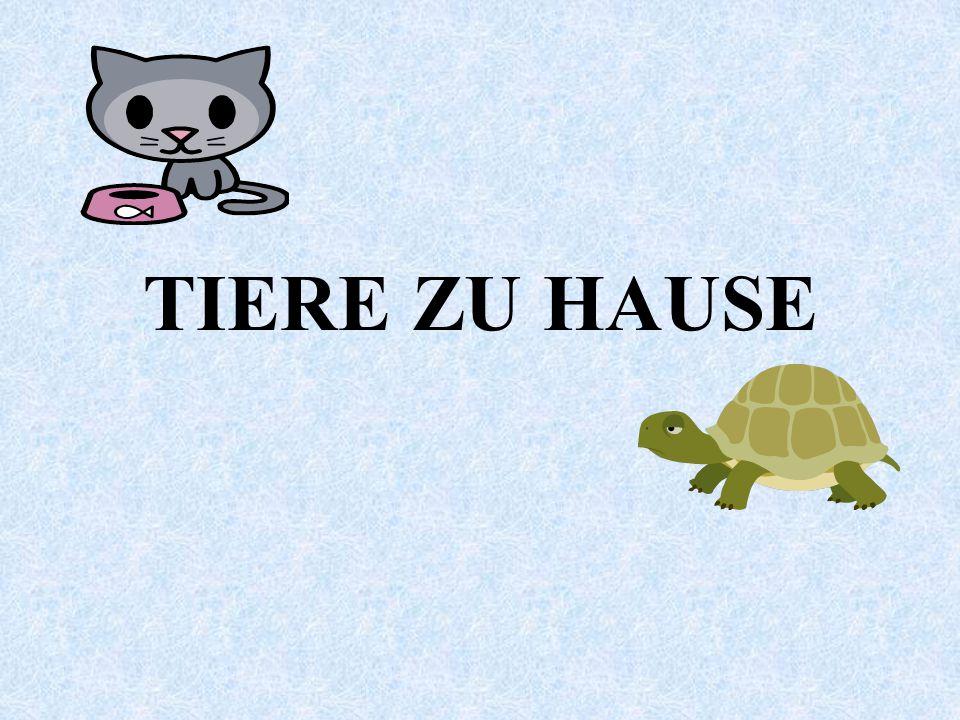 TIERE ZU HAUSE