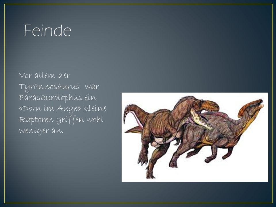 Feinde Vor allem der Tyrannosaurus war Parasaurolophus ein «Dorn im Auge» kleine Raptoren griffen wohl weniger an.