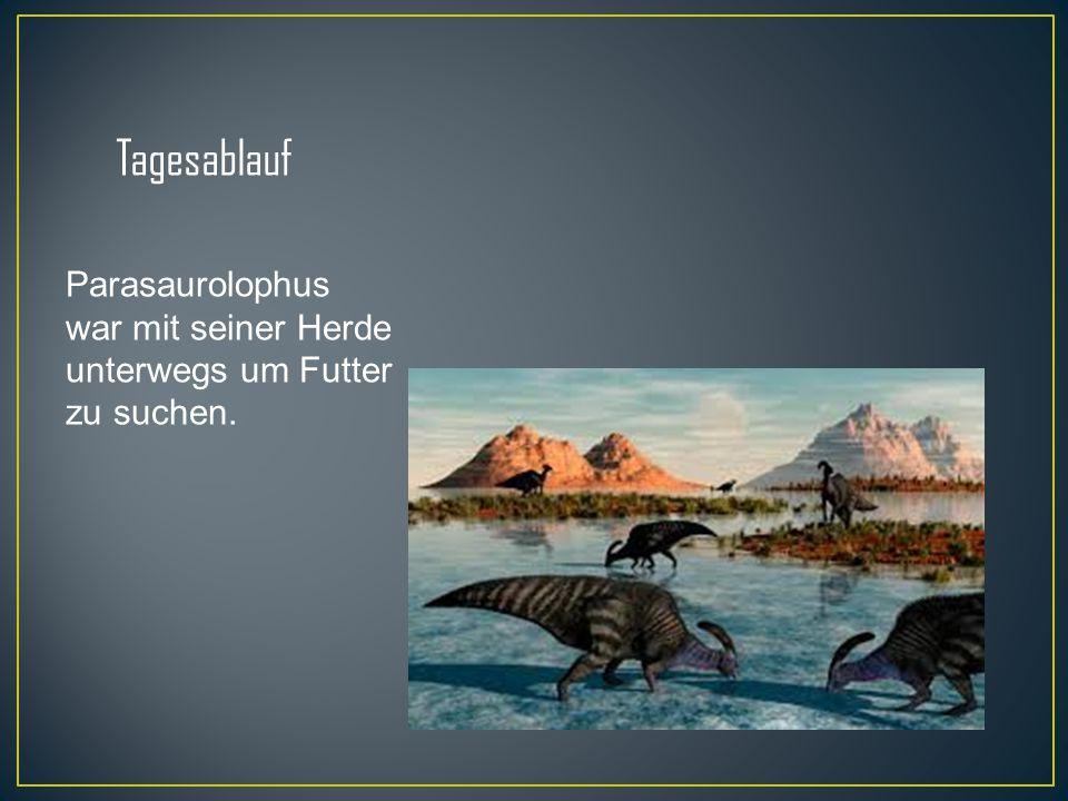 Tagesablauf Parasaurolophus war mit seiner Herde unterwegs um Futter zu suchen.