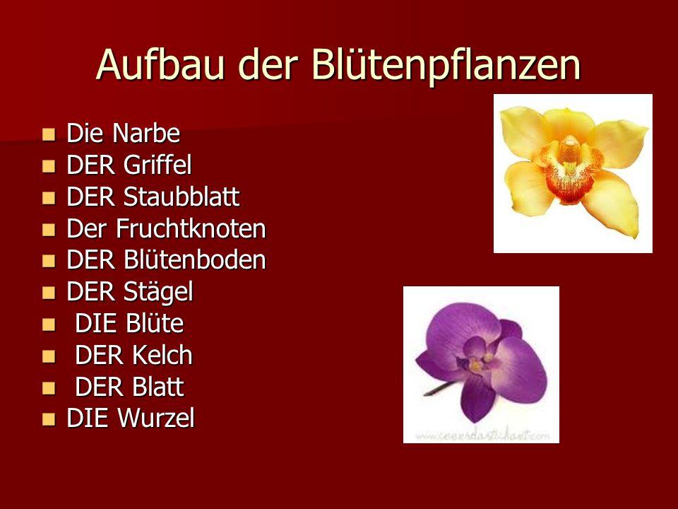 Aufbau der Blütenpflanzen