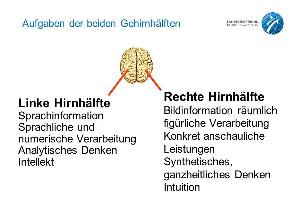 Aufgaben der beiden Gehirnhälften