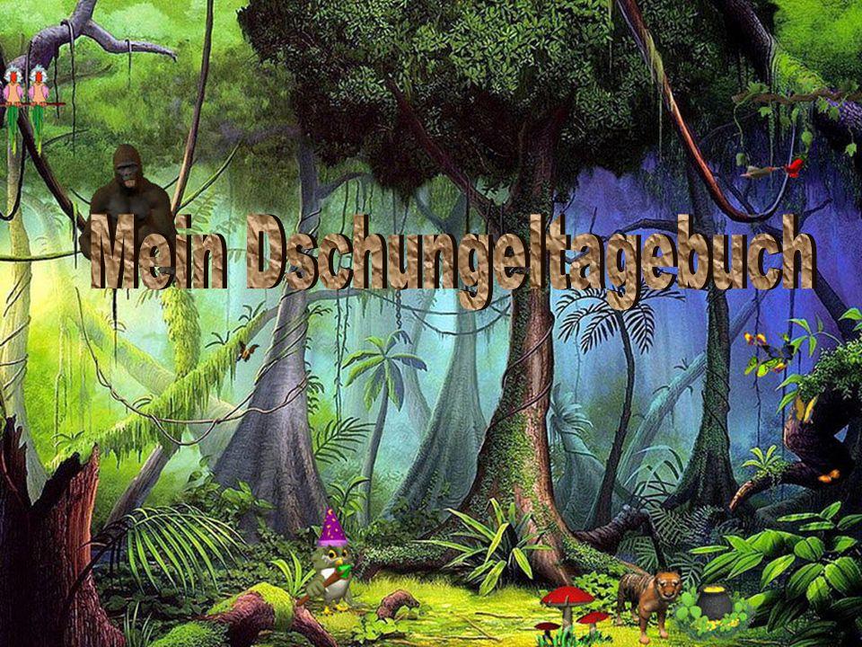 Mein Dschungeltagebuch