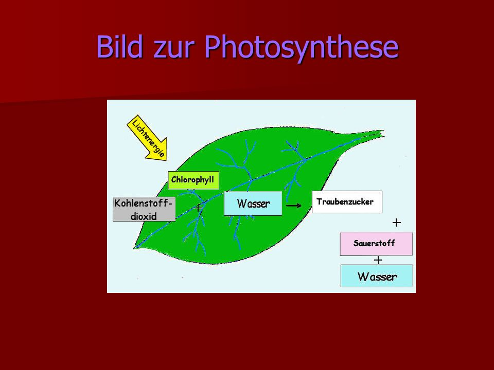 Bild zur Photosynthese