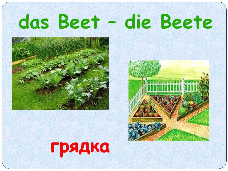 das Beet – die Beete грядка