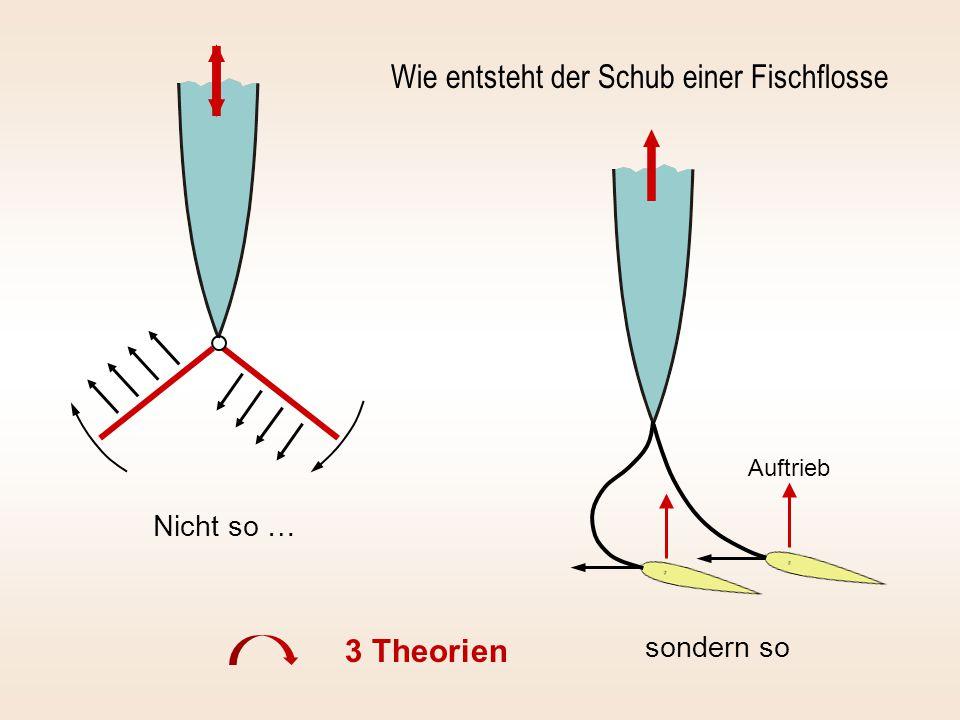 Wie entsteht der Schub einer Fischflosse