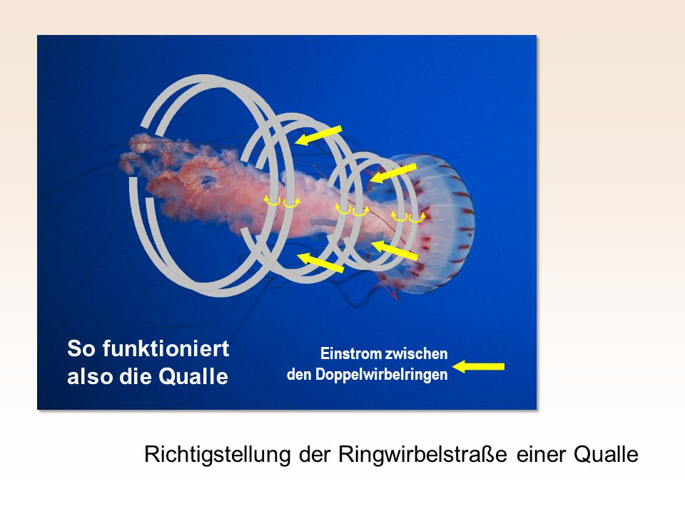 So funktioniert also die Qualle