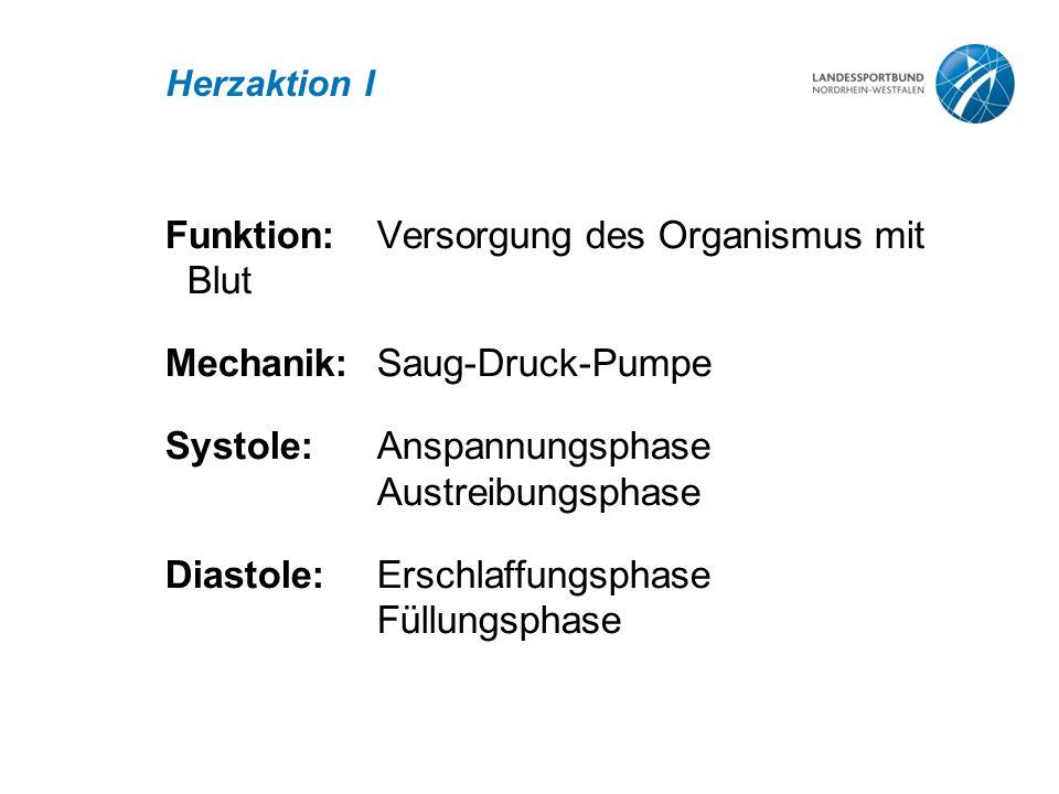 Funktion: Versorgung des Organismus mit Blut