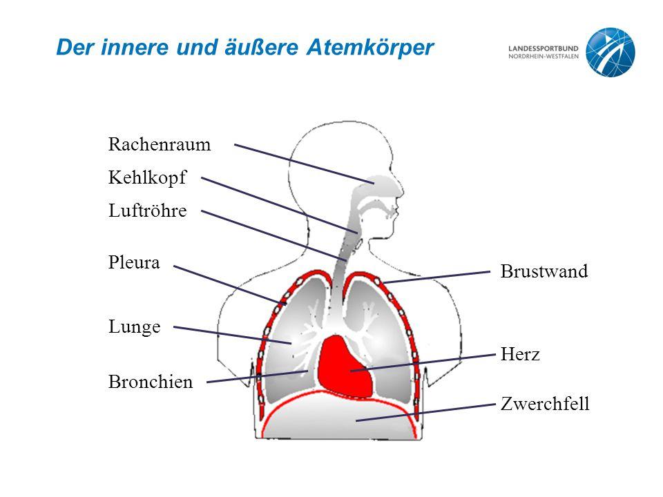 Der innere und äußere Atemkörper
