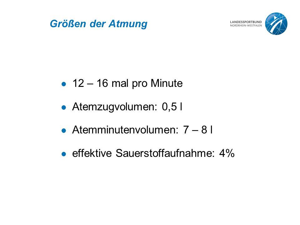Atemminutenvolumen: 7 – 8 l effektive Sauerstoffaufnahme: 4%