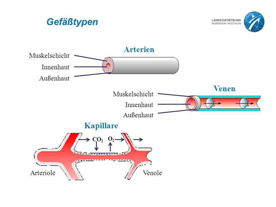 Gefäßtypen Arterien Venen Kapillare Muskelschicht Innenhaut Außenhaut