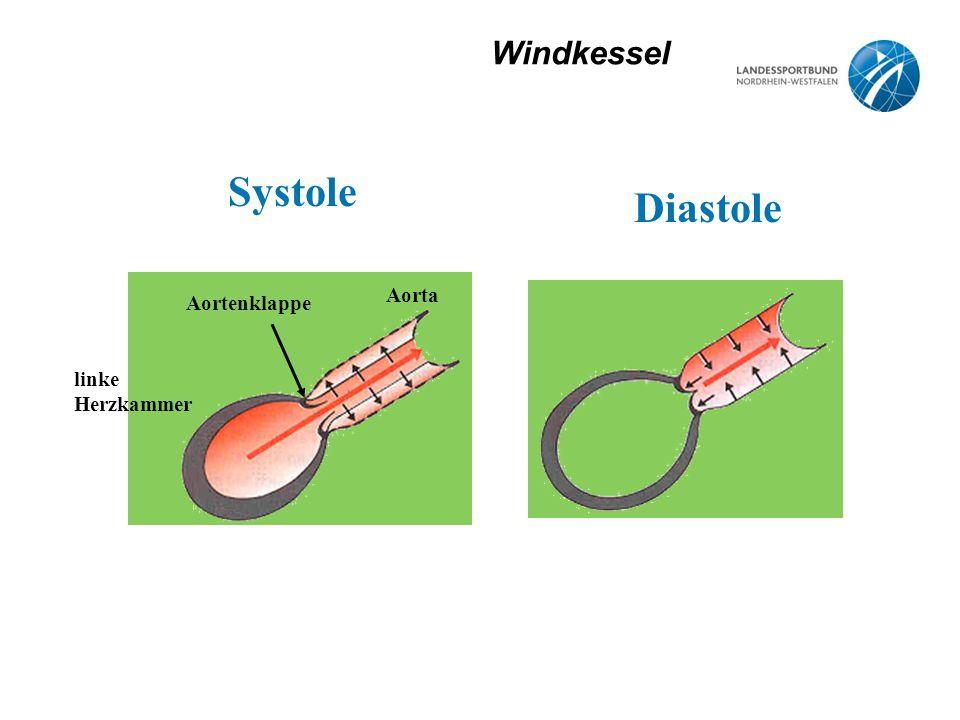 Windkessel Systole Diastole linke Herzkammer Aortenklappe Aorta