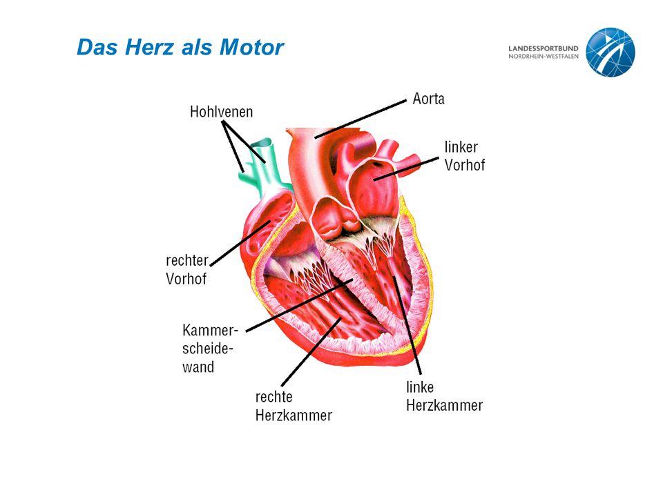 Das Herz als Motor