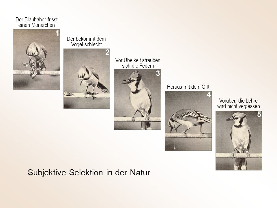 Subjektive Selektion in der Natur